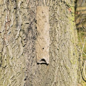Bark Crevice