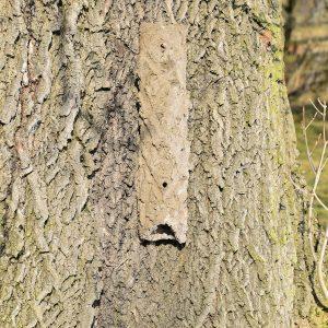 Bark Crevice
